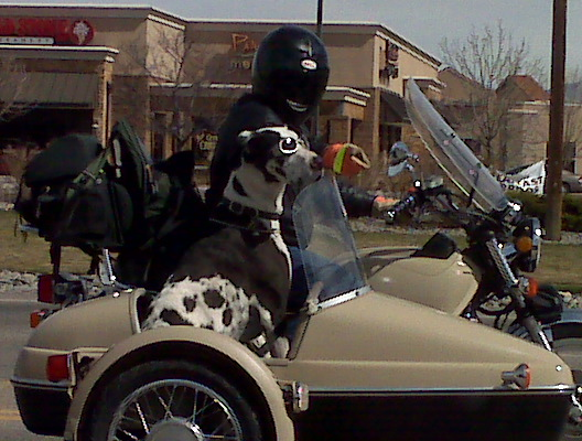 Dog riding on motorcycle