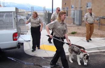 Staff members bringing dog into facility